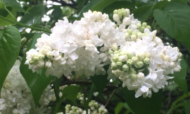 flowers rain 1