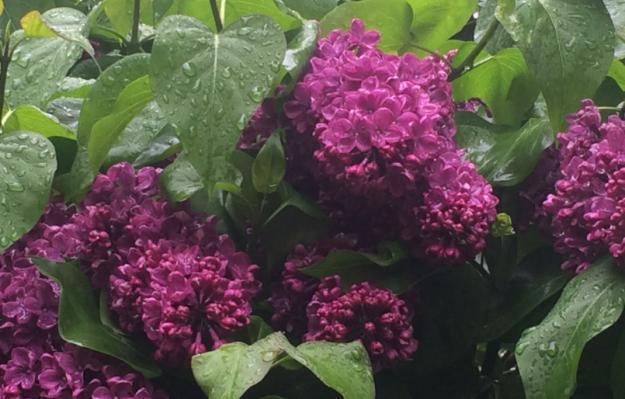 flowers rain 2
