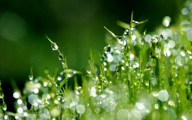 grass_moisture_dew_drops_morning_17514_2560x1600