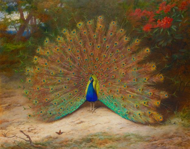 Archibald Thorburn, Peacock and Peacock Butterfly